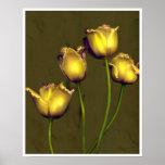 Four tulips print