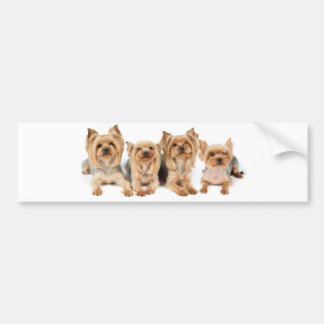 Four yorkies bumper sticker