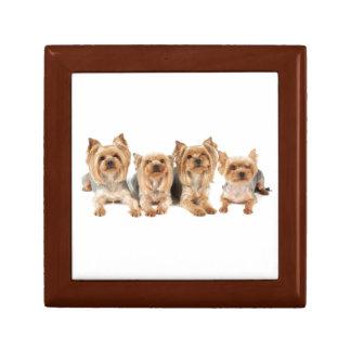 Four yorkies gift box