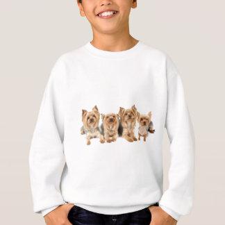 Four yorkies sweatshirt