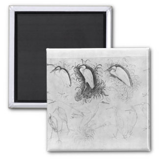 Fourteen egrets, from the The Vallardi Album Square Magnet