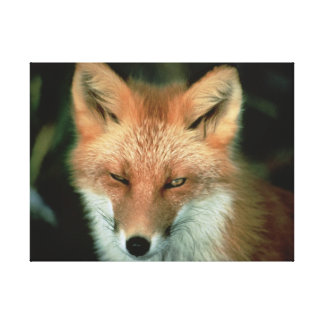 FOX STRETCHED CANVAS PRINTS