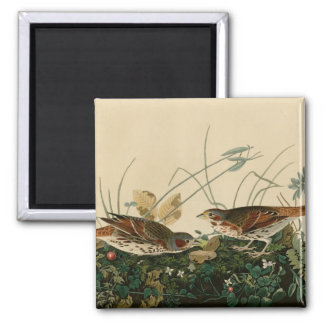 Fox colored sparrow magnet