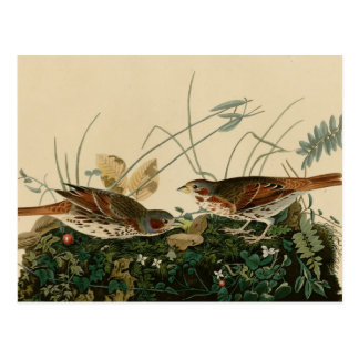 Fox coloured sparrow postcard