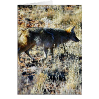 Fox Coyotes Wild Anilmal In Field Greeting Card