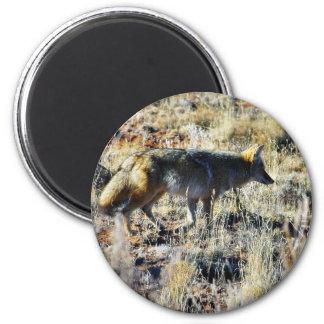 Fox Coyotes Wild Anilmal In Field Refrigerator Magnet