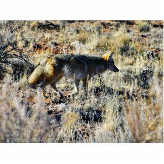 Fox Coyotes Wild Anilmal In Field Standing Photo Sculpture