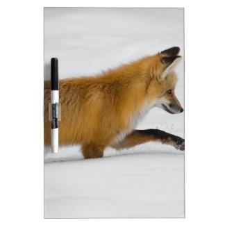 Fox Dry-Erase Whiteboard