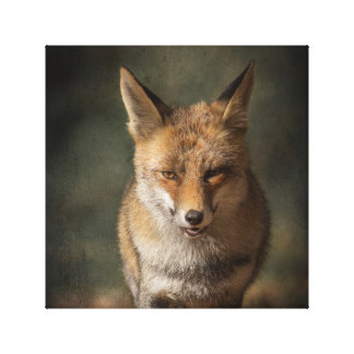Fox Gallery Wrap Canvas
