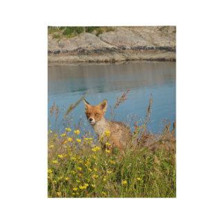 Fox in flower field in midnight sun Lofoten Norway Wood Poster