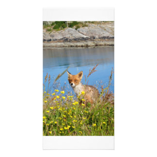 Fox in flower field in midnight sun Norway card Customized Photo Card