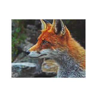Fox In HD Stretched Canvas Prints