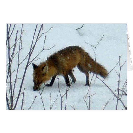 Fox in Snow -Blank Card