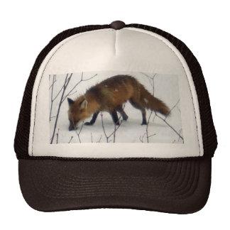 Fox in Snow Cap