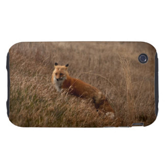 Fox in the Grass Tough iPhone 3 Case