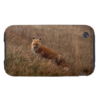 Fox in the Grass Tough iPhone 3 Case