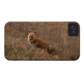 Fox in the Grass iPhone 4 Case-Mate Cases