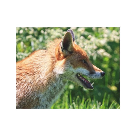 fox poster, foxy decor, fox cub gifts canvas