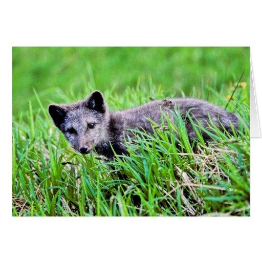 Fox Pup Greeting Card