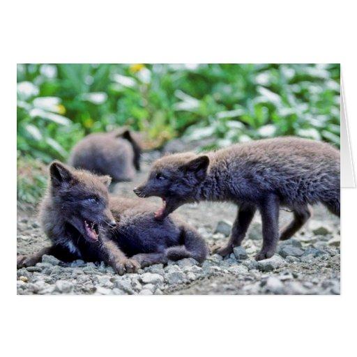 Fox Pups Card