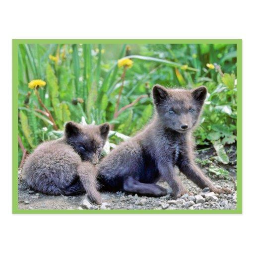 Fox Pups Postcards