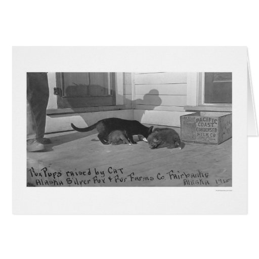 Fox Pups Raised by Cat 1915 Greeting Card