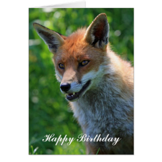 fox red beautiful happy birthday greetings card