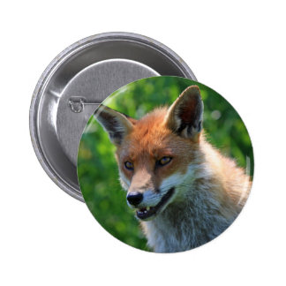 fox red beautiful photo portrait button, pin