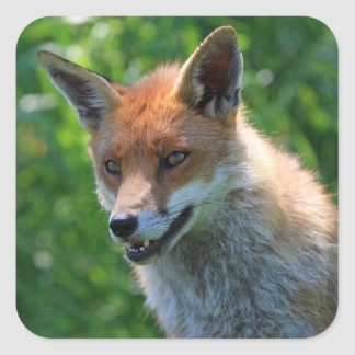 fox red beautiful photo portrait sticker, stickers