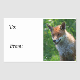 fox red beautiful photo to, from sticker, stickers