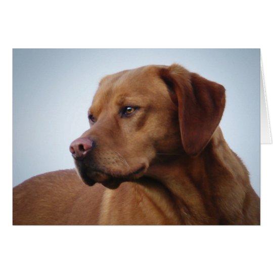 Fox Red Labrador Card