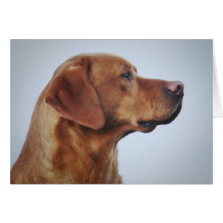 Fox Red Labrador Gundog Card