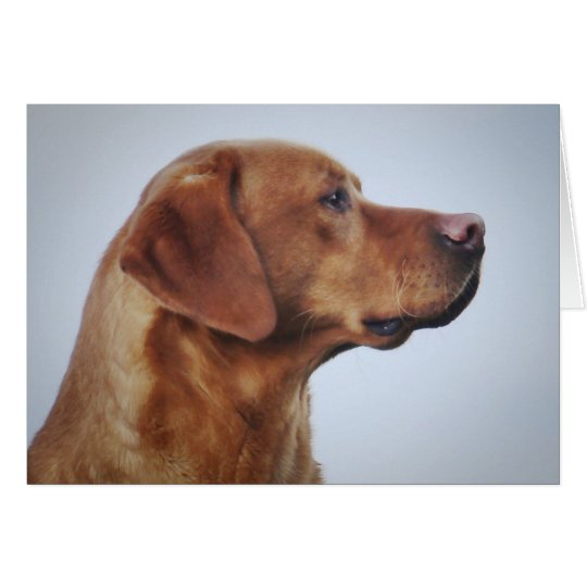Fox Red Labrador Gundog Card
