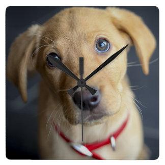 Fox Red Labrador Puppy Square Wall Clock