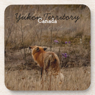 Fox Sniffing the Crocuses; Yukon Souvenir Coaster