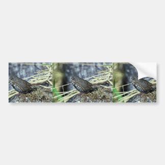 Fox sparrow bumper sticker