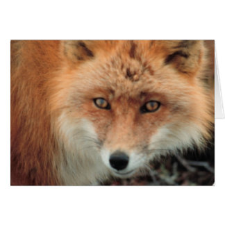 Fox Species Greeting Card