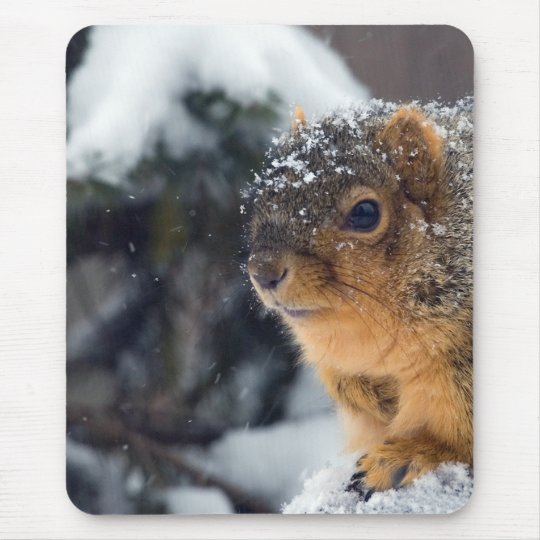 Fox Squirrel in Winter Mouse Pad