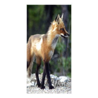 Fox Stands in Pine Woods On Back Legs Personalized Photo Card