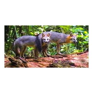 FOX TAIL BRUNCH CUSTOM PHOTO CARD