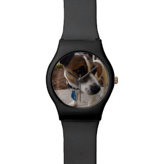 Fox Terrier Dog Attraction, Watch