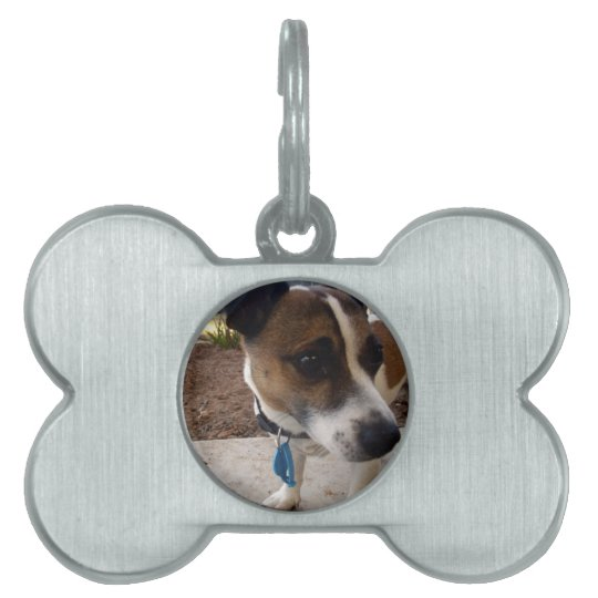 Fox_Terrier,_ Pet ID Tag