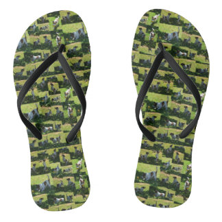 Fox Terrier The Long Hard Day Photo Collage, Flip Flops