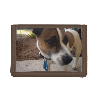 Fox_Terrier,_TriFold Nylon Wallet