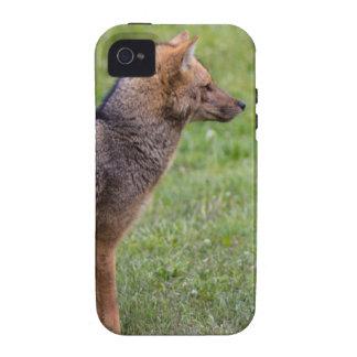 Fox - Torres del Paine iPhone 4/4S Cover