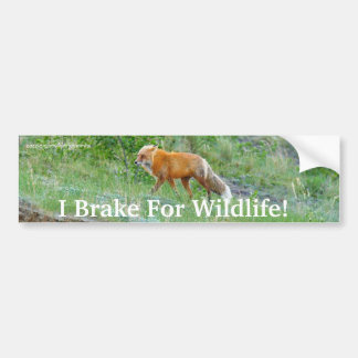 Fox Wildlife Protection Bumper Sticker