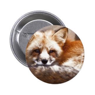Foxes 6 Cm Round Badge