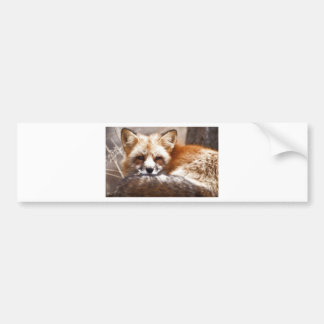 Foxes Bumper Stickers