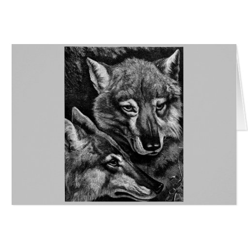 Foxes / Wolves / Coyotes ? Greeting Cards