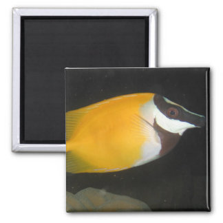 Foxface Rabbitfish Magnet
